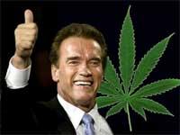 tmb_marihuana_schwarzenegger