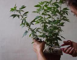 Wenn-man-das-nicht-einhält-werden-sie-die-Pflanze-langsam-aber-sicher-ausrotten.-1