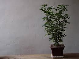 Wenn-man-das-nicht-einhält-werden-sie-die-Pflanze-langsam-aber-sicher-ausrotten.