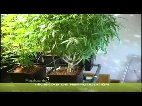 yt-1592-Cannabis-Indoor-teil-7-23-Deutsch-hanf-an-bau