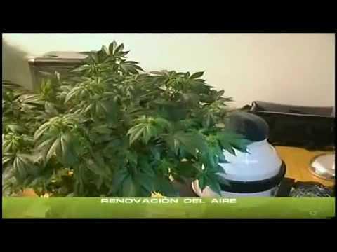 yt-1605-Cannabis-Indoor-1-Standort-des-GrowsBelftung
