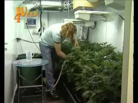 yt-1607-Culture-indoor-cannabis-part-3-HD