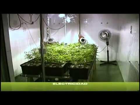 yt-1613-Cannabis-Indoor-teil-2-23-Deutsch-hanf-anbau