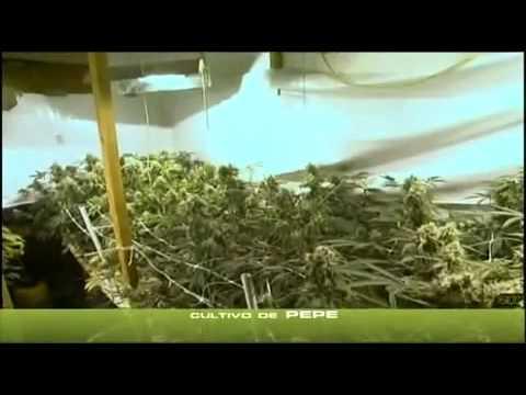 yt-1621-Cannabis-Indoor-teil-23-23-Deutsch-hanf-an-bau