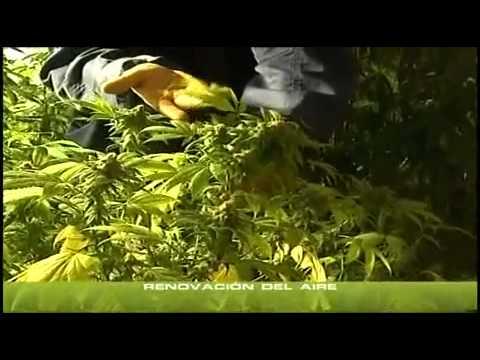 yt-1627-Cannabis-Indoor-teil-1-23-Deutsch-hanf-an-bau