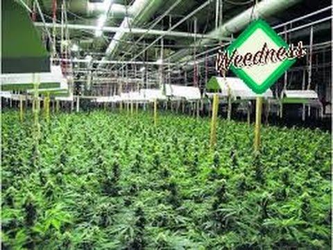 yt-1635-Cannabis-Indoor-Anbau-doku-teil-33-German