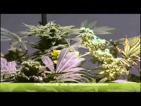 yt-1639-Cannabis-Indoor-Anbau-doku-teil-13-German