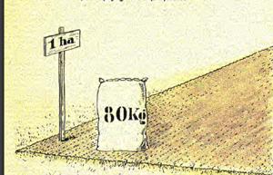 Ertrag-pro-Hektar-80kg