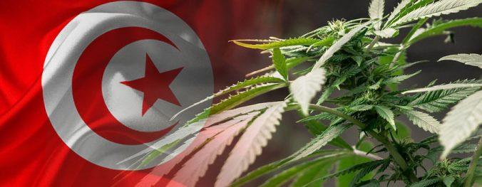 Türkei erlaubt die kontrollierte Cannabisproduktion in 19 Provinzen