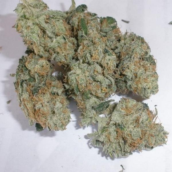 cannalope-haze-marijuana-strain-2