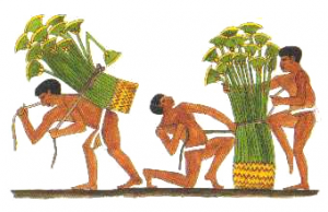 Papyrus-Abtransport in Ägypten 02, Abbildung: Zwei Männer schnüren ein Bündel Papyruspflanzen zusammen. Ein dritter Mann lädt es auf seinen Rücken, um es abzutransportieren (Grab des Uchhetep, Meir). aus: Wenzel 2001, S.24.